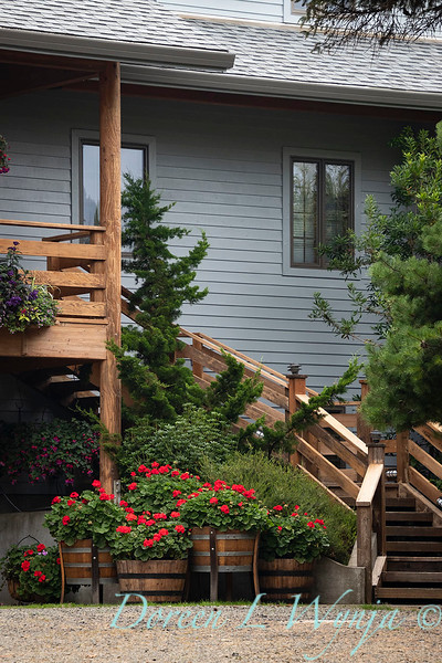 Pelargonium red geranium - wine barrel containers - Wooden stairway_3689.jpg