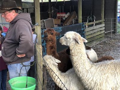 LunaSea Alpaca Farm, Clermont, FL