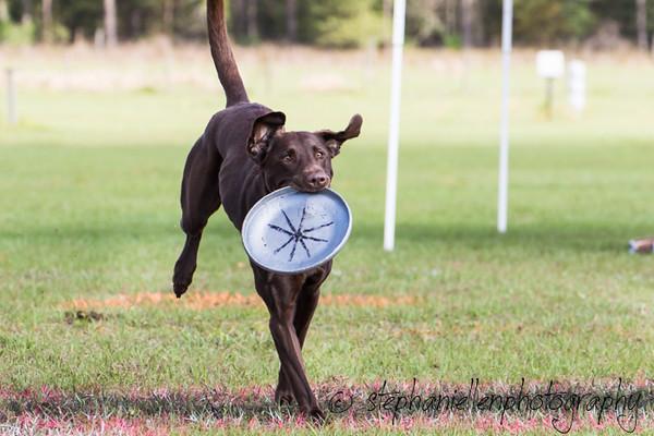 _MG_2591Up_dog_International_2016_StephaniellenPhotography.jpg