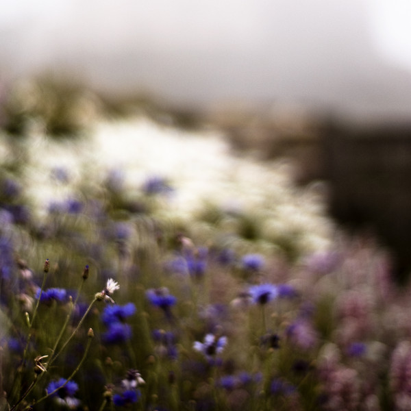 Gertrude Jeckyll's garden, Lindisfarne UK