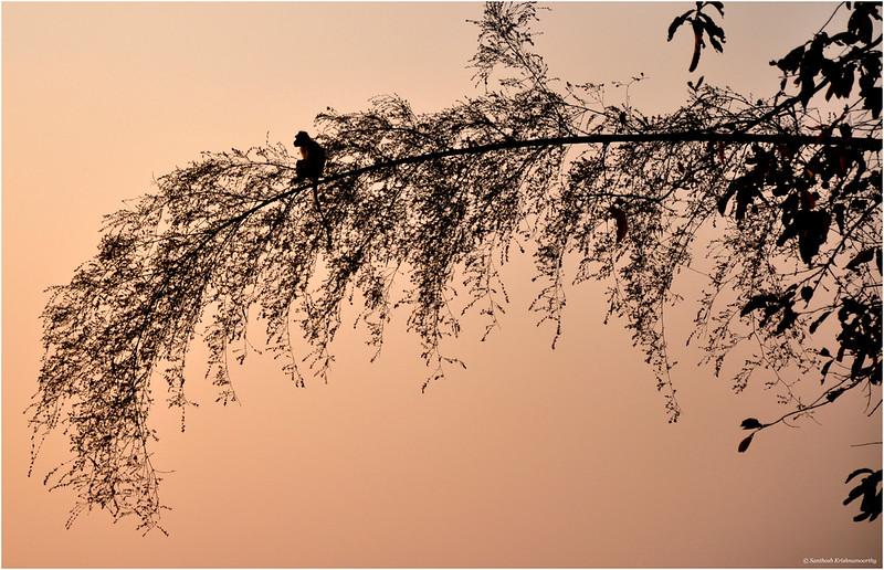 A delicate balance.....