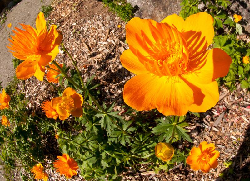 Orange flowers at Keystone(1).jpg