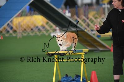 Dauphin Dog Training Club AKC Agility Trial October 21-22