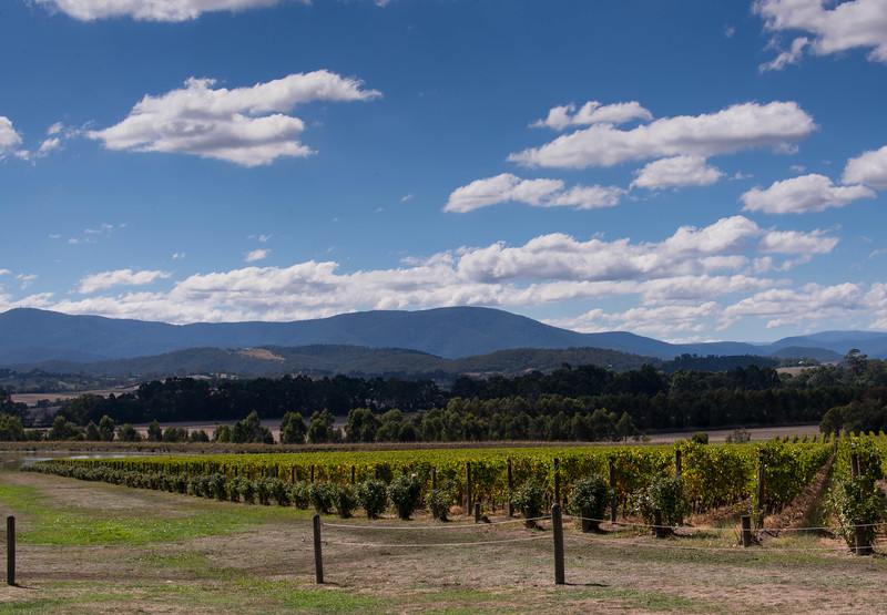 Winery View.jpg