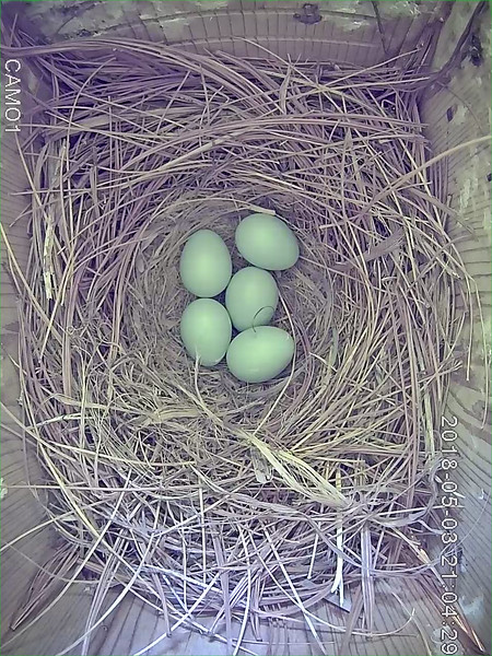 May 27, egg 5