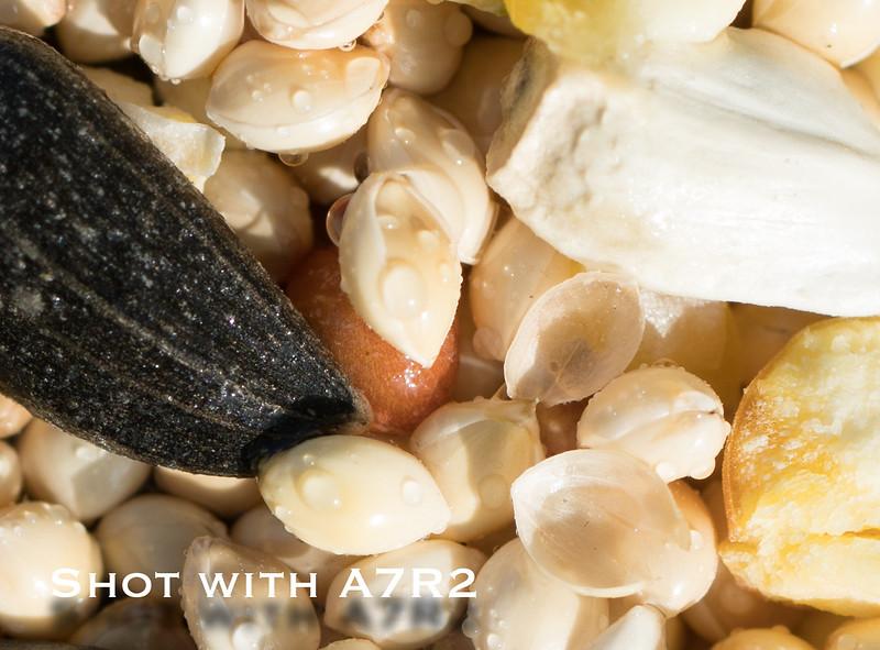 A7R2 Macro Comparison-8.jpg