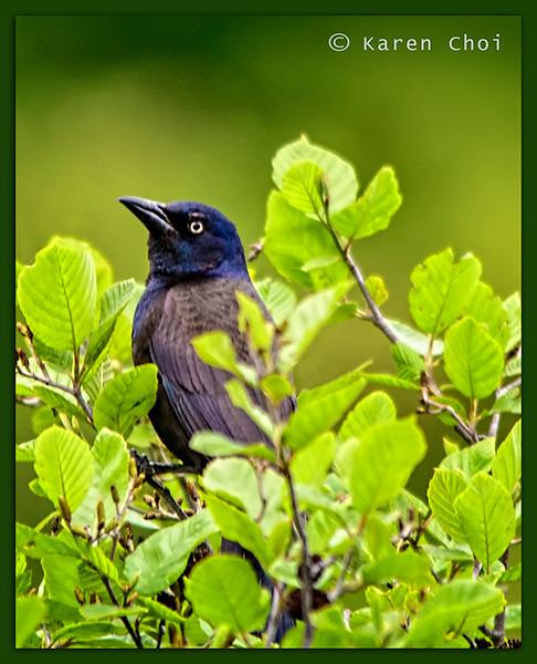 Bird 1 sm.jpg