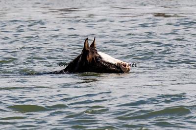 Swim Back