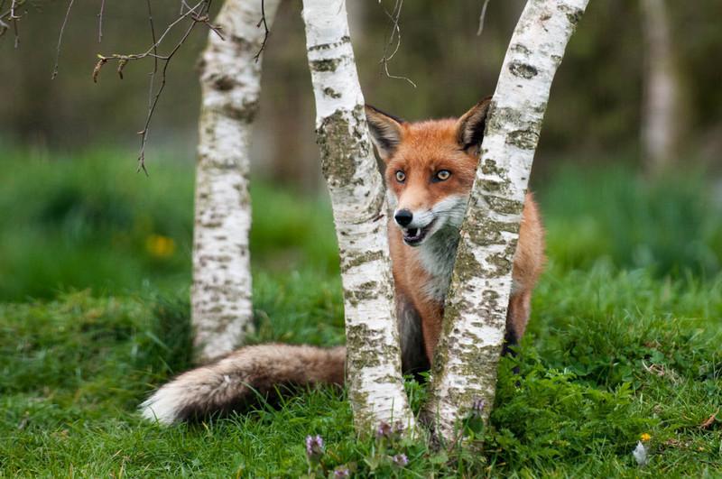 British Wildlife Centre -2740.jpg