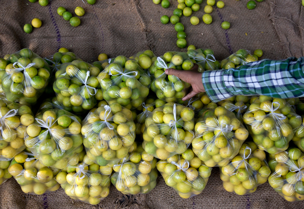 ". An Indian vendor arranges lemons for sale in plastic bags in Hyderabad, India, Monday, June 4, 2018. The theme for this year\'s World Environment Day, marked on June 5, is ""Beat Plastic Pollution.\"" (AP Photo/Mahesh Kumar A.)"