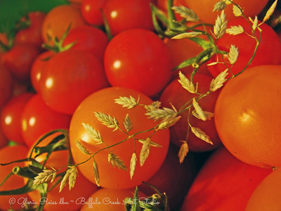 Tomatoes and weeds
