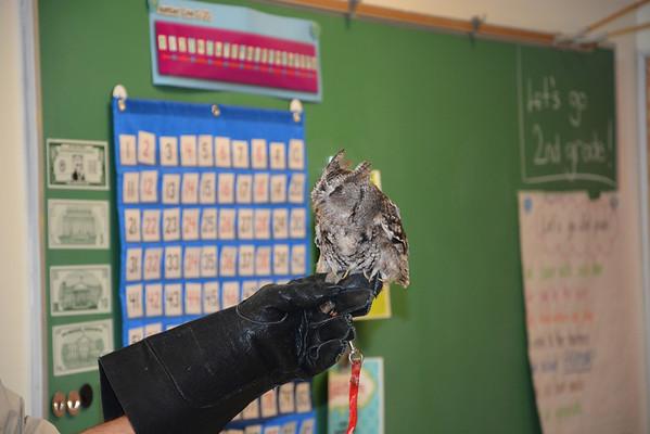 2nd Grade Owls