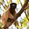 Madagascar 2017 (19)