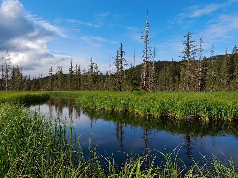 An old tidal slough, now freshwater,  in the muskeg near Eagle river, June 13th 2011.