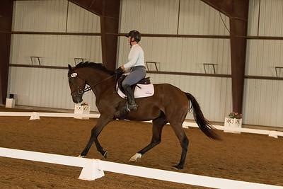 Horse 572
