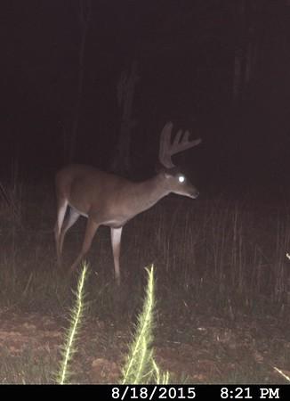 Deer 2015-16
