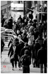 2011 02 26 Hamburg Ende Februar 2011