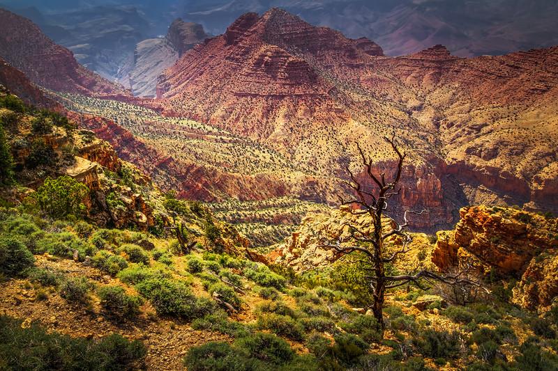 Burnt Tree at the Desert View (Arizona)