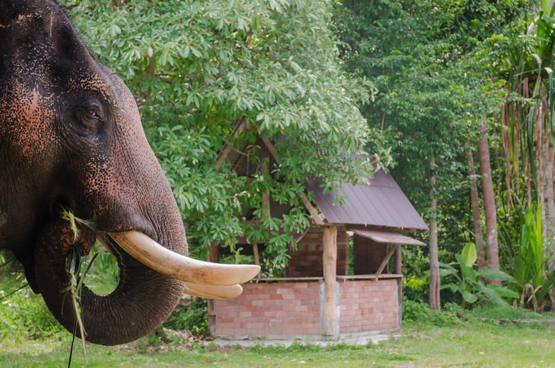 Rudraksh Elephant.jpg