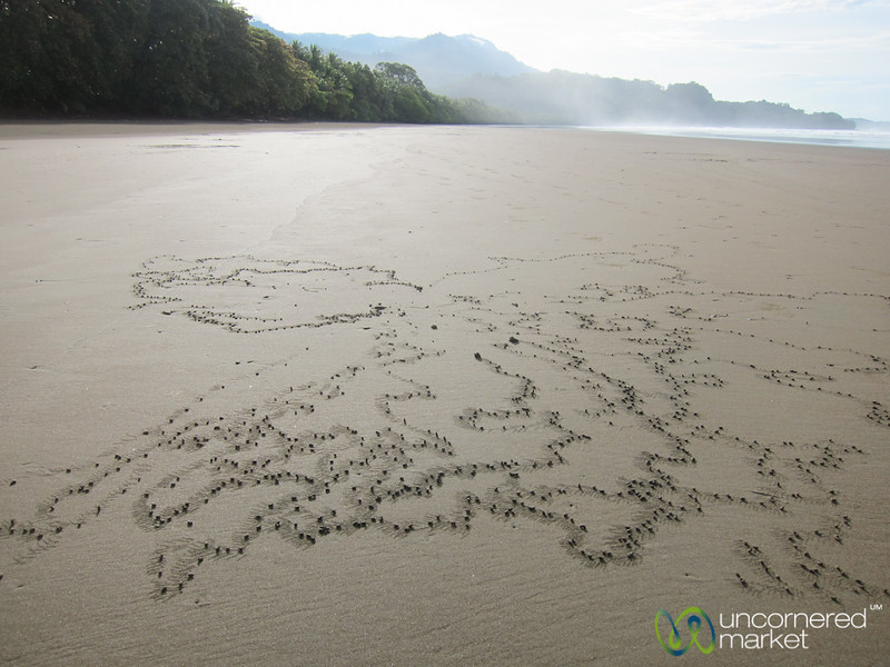 Design by Nature, this time Crabs - Bahia Ballena, Costa Rica