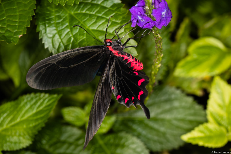 Butterfly Place 7