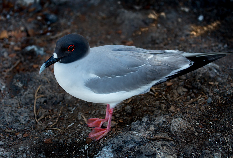 Galapagos_MG_4936.jpg
