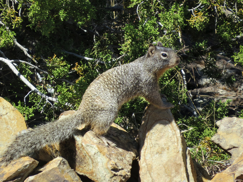 Squirrel on rock.jpg