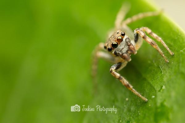 2014-09-20 Pasir Ris Mangrove Swamp