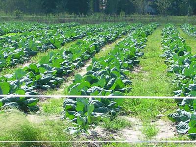 Holden Farms,NC.