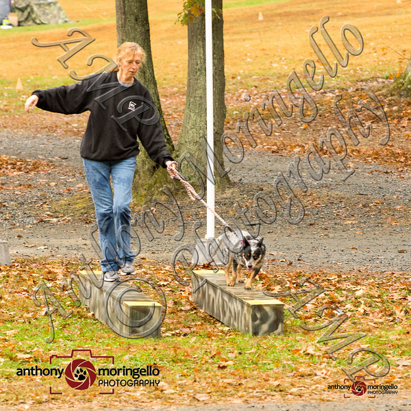dirtydog_0038-32066.jpg