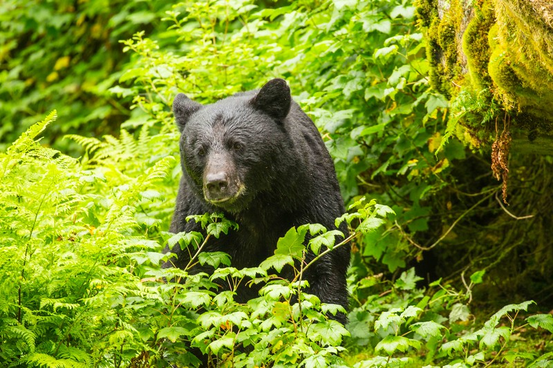 Anan Bears 21.jpg