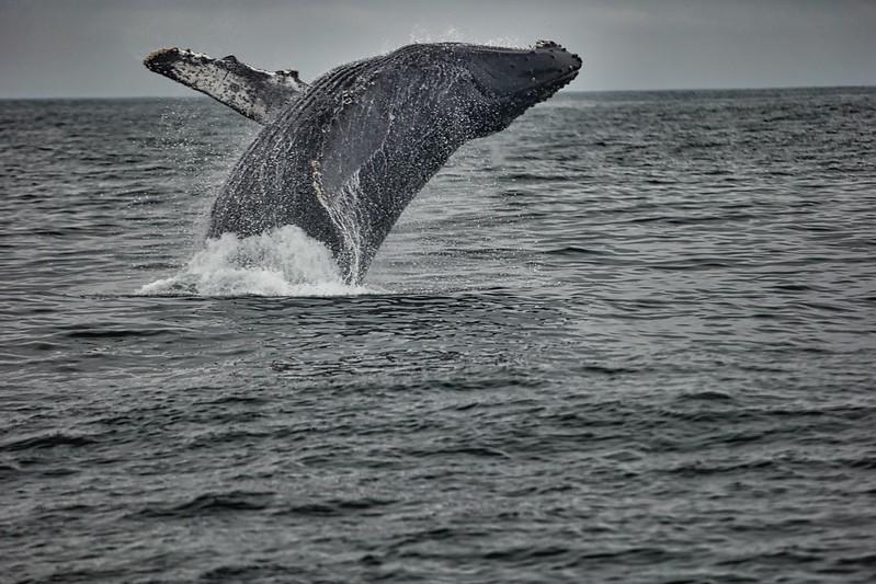 Whales2018-08-21 (7).jpg