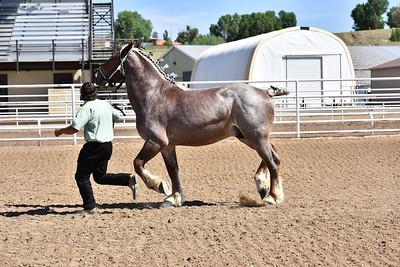 Stallion Halter