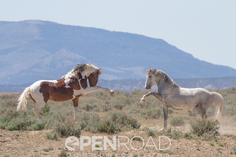 Wild horses in Colorado