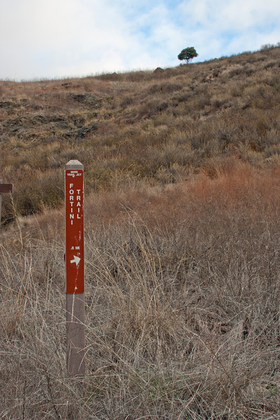 Started on the south side of the park on the Fortini Trail. Wasn't much blue sky today; I got just a peek of it here.