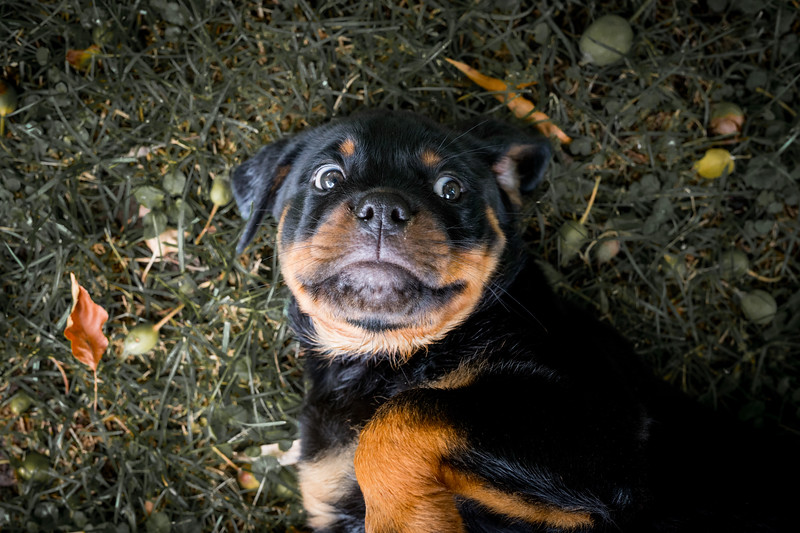 Pup1044.jpg