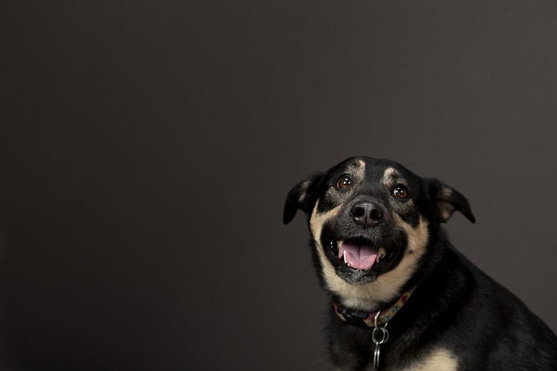 19_0712_dogs_ww-0990.jpg