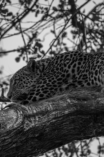 Botswana_June_2017 (3668 of 6179).jpg