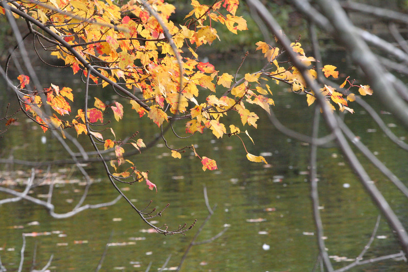 Quogue Wildlife Refuge, Quogue, NY.