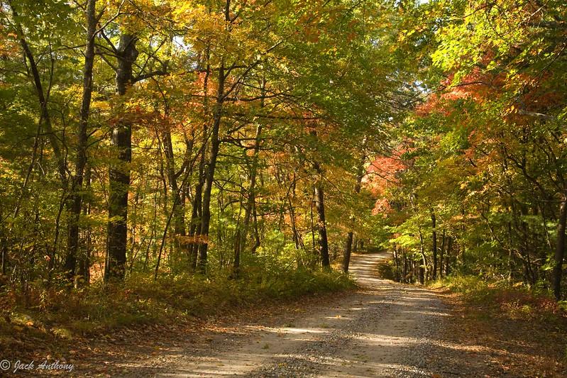 Mountain road to Dockery Lake, Lumpkin Co., Ga.