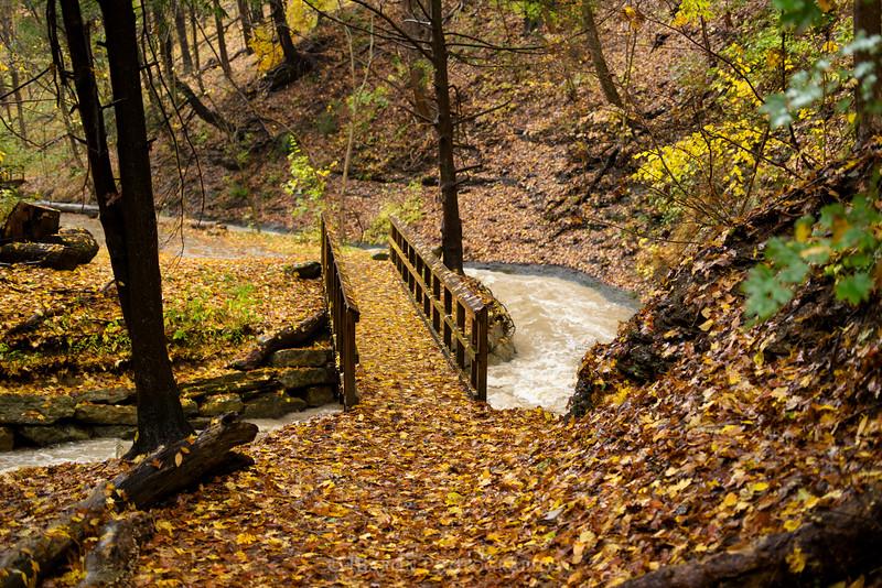 IMGP9262 fall run park 9262.jpg
