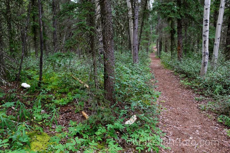 Chadburn Lake Trail