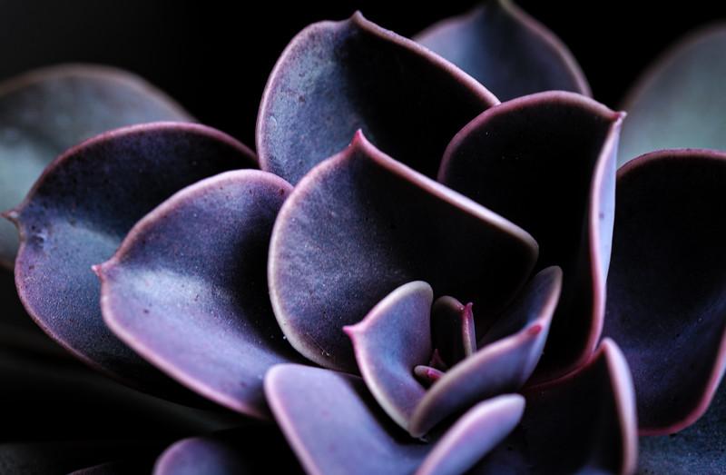 succulent-1163.jpg
