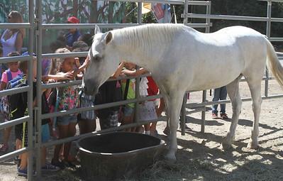 Wild Horse & Burro