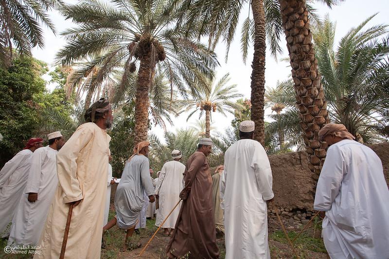 Palm Tree Auction 5- Mudhaibi.jpg
