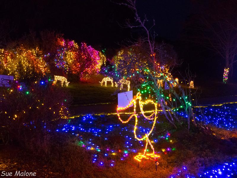 Lights in Brookings-9.jpg