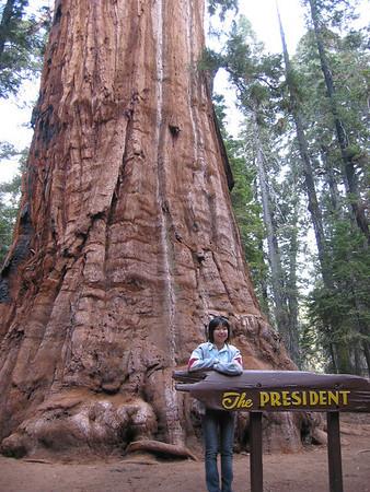 Sequoia NP 2004