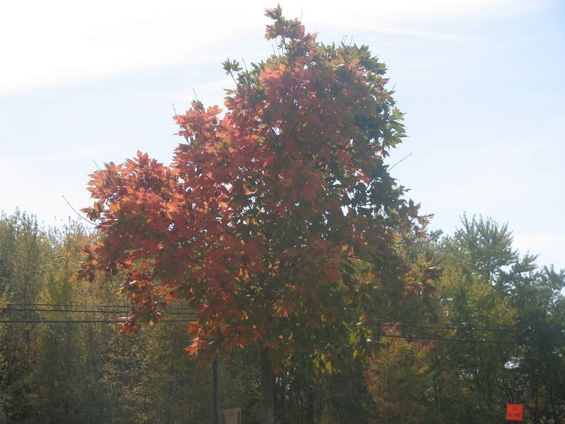 Fall pics 2008 023.jpg