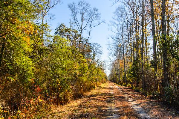 Great Dismal Swamp NWR