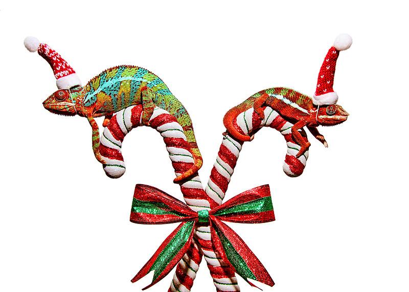 Christmas Chams.jpg